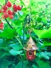 Red Dew Drop